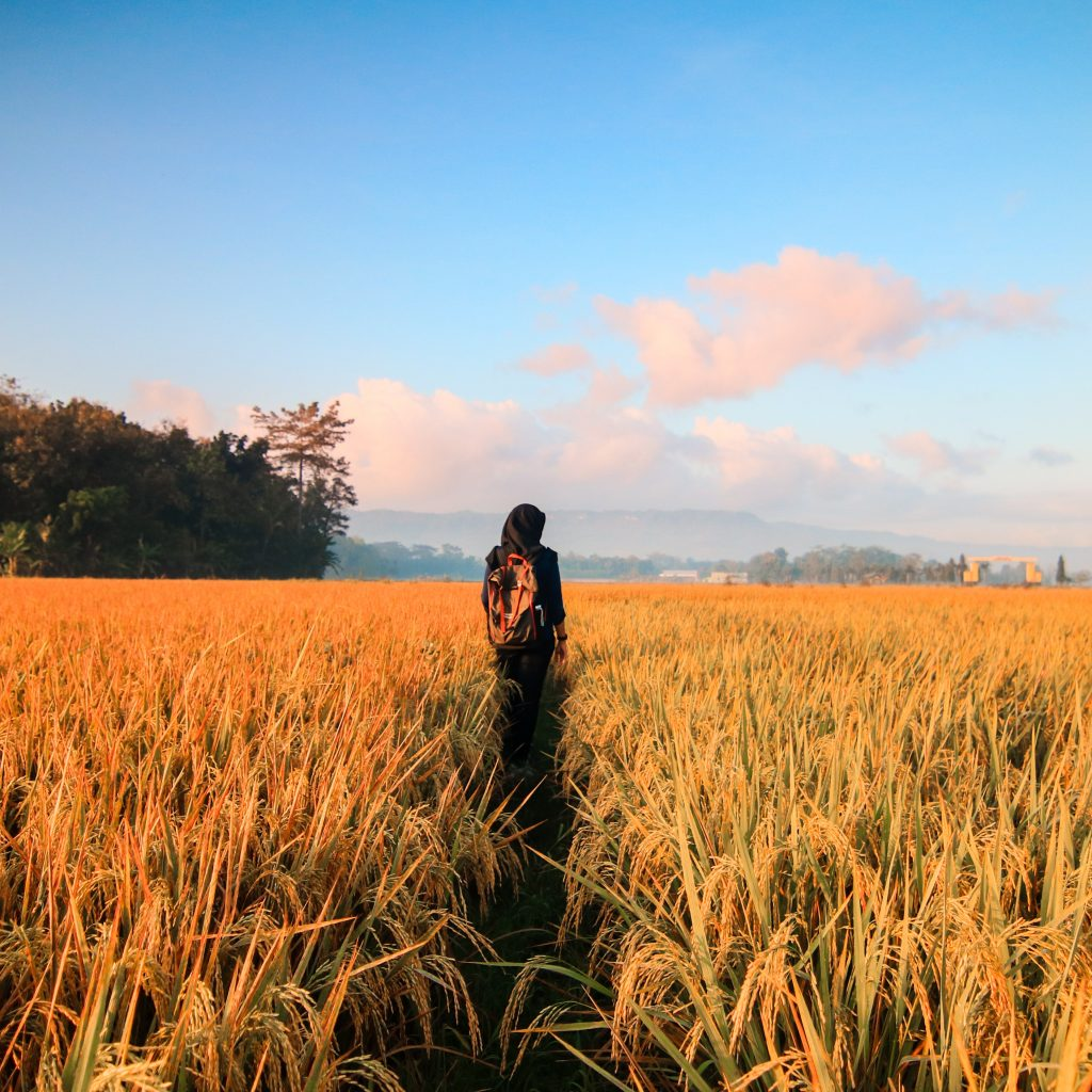 adventure-agriculture-barley-789555